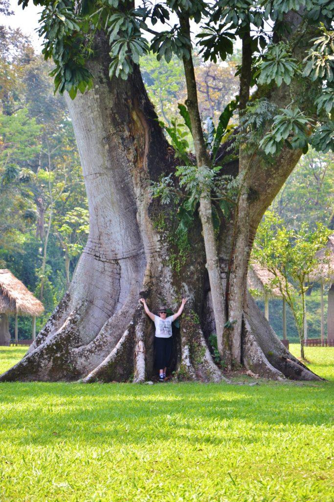 Guatemala - Quirigua - Dreams World - Blog voyage